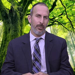 Rabino Abud Zonana